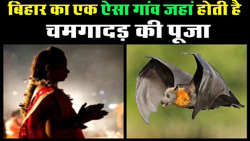 जिन चमगादड़ो की वजह से फैला कोरोना वायरस, बिहार में आज भी होती है उनकी पूजा...