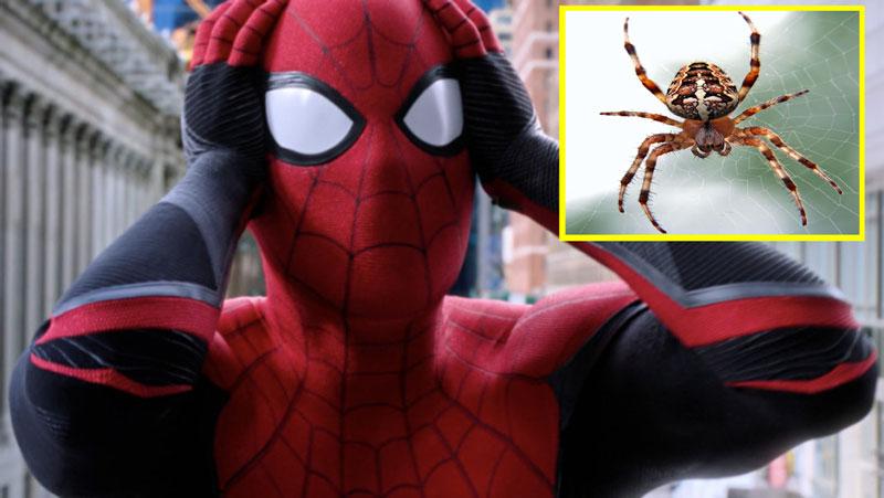 3 भाइयों ने फिल्म देखकर स्पाइडर-मैन बनने की चाह में खुद को मकड़ी से कटवाया, अब हो गया ये हाल