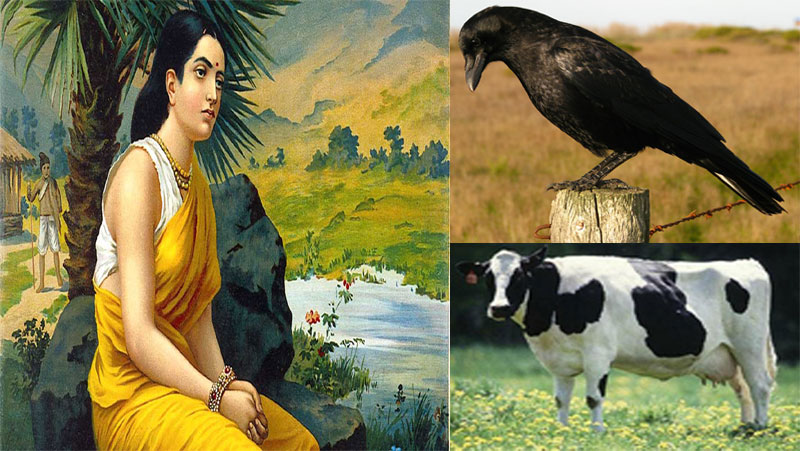 माता सीता का वह भयानक श्राप आज भी झेल रहे है ये जीव | जानिए...