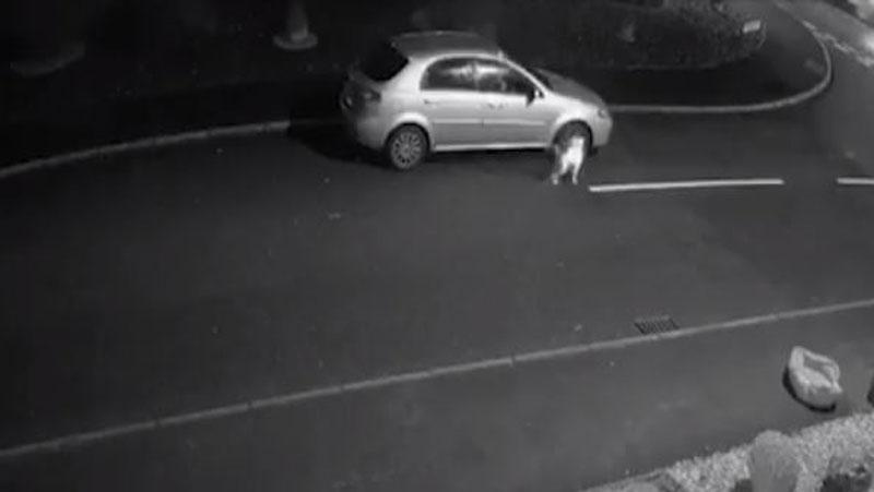 Video: कार का दरवाजा पीटता रहा कुत्ता और सड़क पर बेसहारा छोड़ गया मालिक, भावुक कर देगा वीडियो