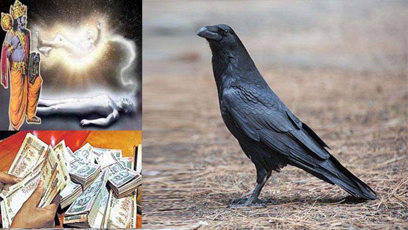आपके जीवन में होने वाले अच्छे-बुरे वक्त का संकेत देगा कौवा, कौवे को इस दिशा में देखा तो हो जाएंगे धनवान..