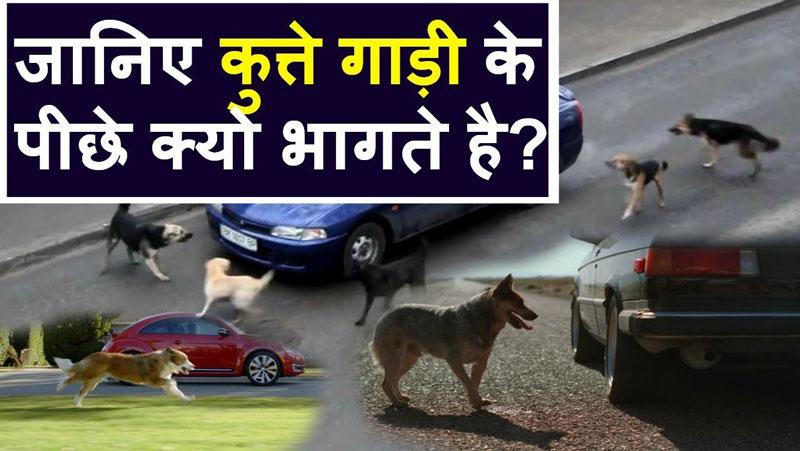 कुत्ते गाड़ियों के पीछे क्यों भागते है? जानिए इसके पीछे का वैज्ञानिक कारण!