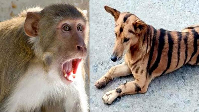 बंदरो से खेत की फसल बचाने के लिए किसान ने कुत्ते को बना दिया टाइगर, फिर कुत्ते को देख बन्दर...